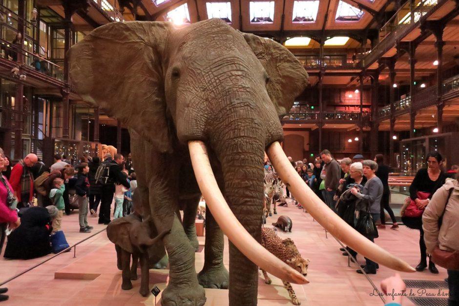 Museum National d'Histoire Naturelle à Paris - Eléphant