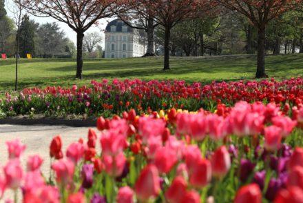 Château de Cheverny - Château et tulipes